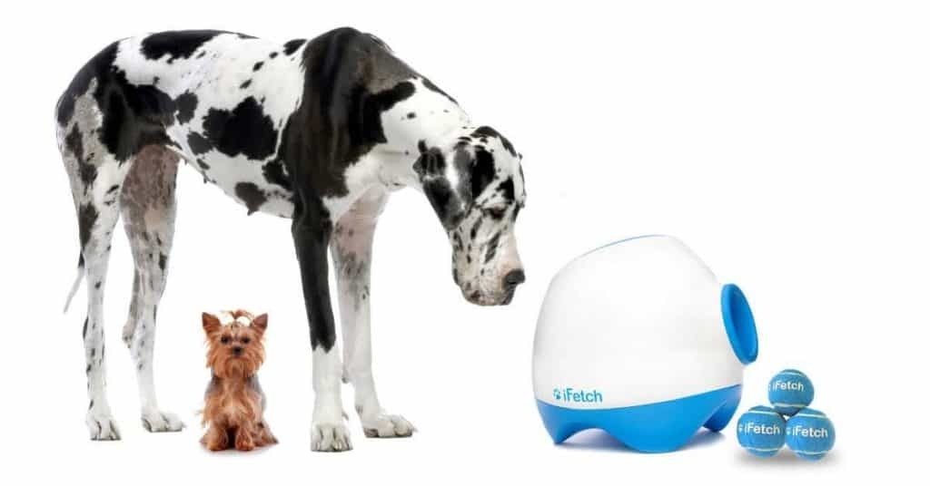 iFetch is one of the best ball throwers on the market