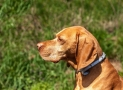 Seresto Flea and Tick Collar Review: Pest Free Solutions For Your Pet